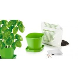 TESCOMA souprava pro pěstování bylinek SENSE, bazalka
