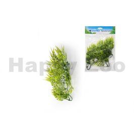 Terarijní rostlina UNIONSTAR Filodendron (M) 30cm