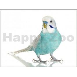 Andulka - Papoušek vlnkovaný