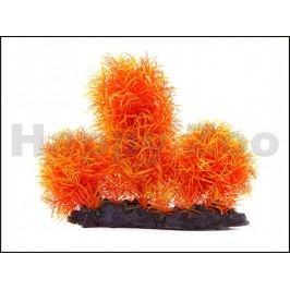 Rostlina JK Orange Hygro 16cm