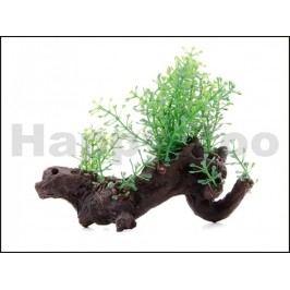 Rostlina JK kořen Amazon 10cm