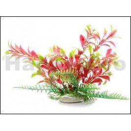 Rostlina JK - Ludwigia červenozelená 14-17cm