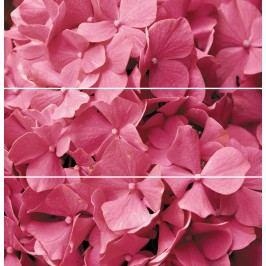Dekor Ceracasa Velvet růžová Flowers 73x73 cm (3ks), lesk DFLOWERS3
